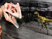 Centro Paleontológico (CENPÁLEO) - Museu da Terra e da Vida